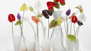 4 useful tips to make your flowers last longer