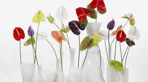 Handige tips om je bloemen langer mooi te houden