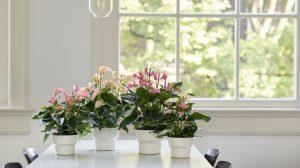 Dag van de Leraar: 2 cadeau-ideeën met planten om zelf te maken
