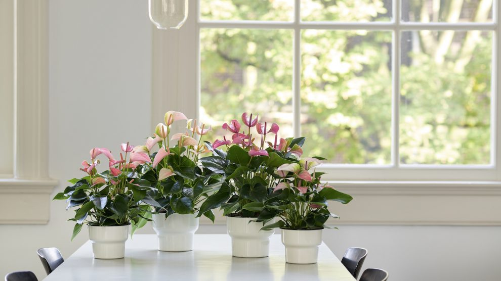 Teacher's Day: 2 DIY gift ideas with plants