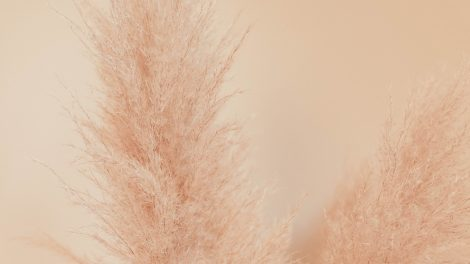 De trend die alle interieurs overneemt: pampasgras