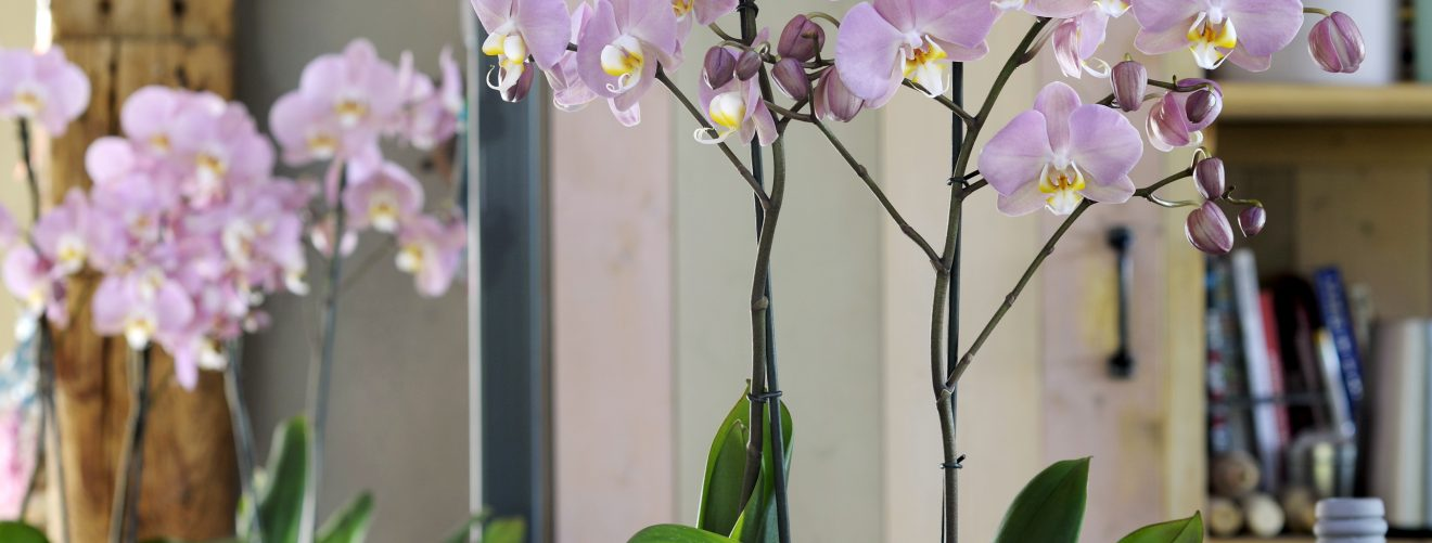 Trend alert: roze planten in je interieur