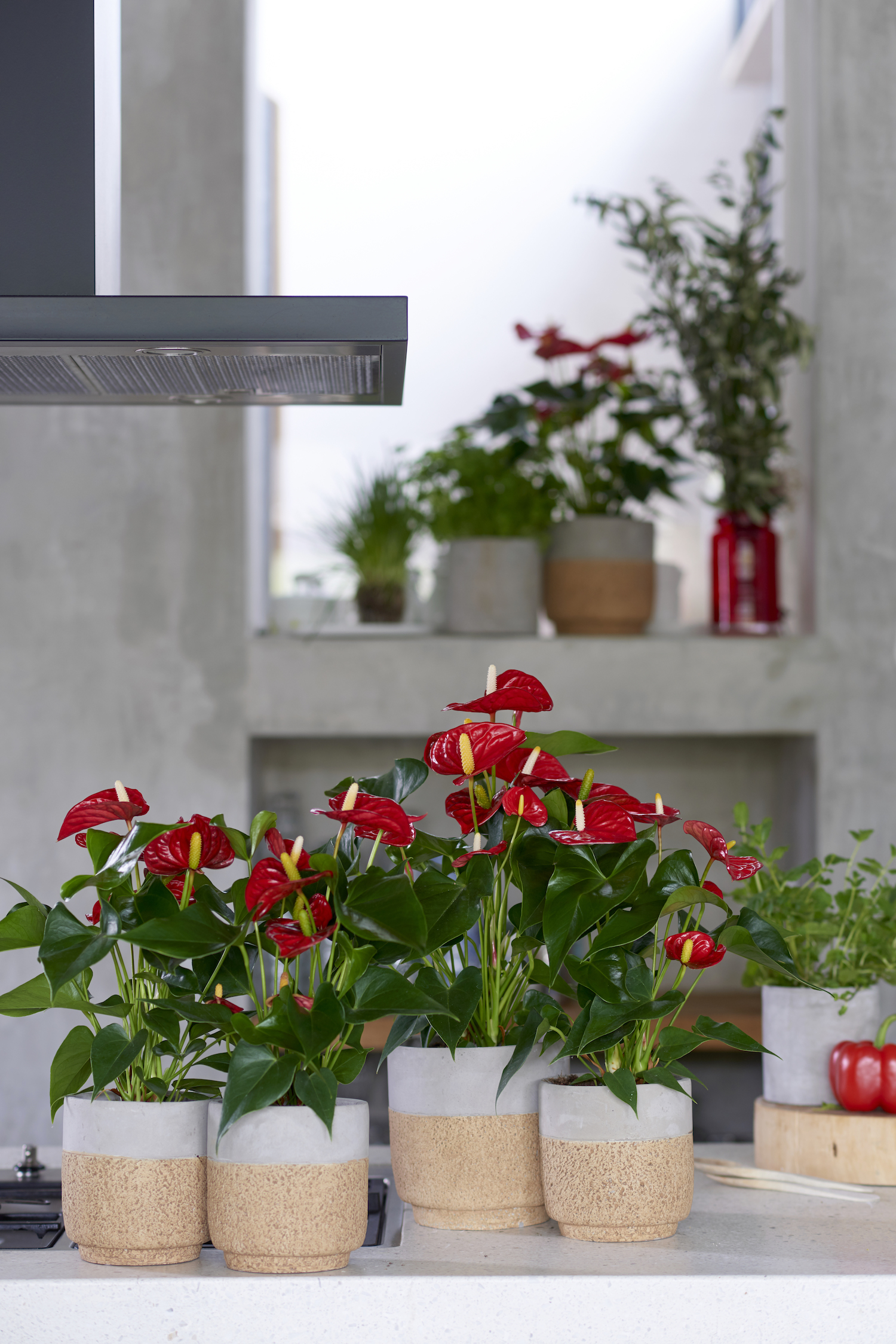 Tips en inspiratie voor mooie vensterbank styling