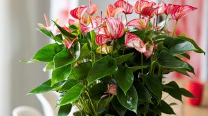 Anthurium Livium: a new generation in anthuriums (+ win!)