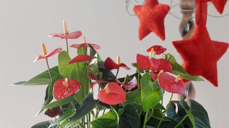 Zo ga je de december stress tegen met planten