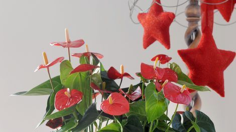 How plants can help to reduce december stress and boost your mood