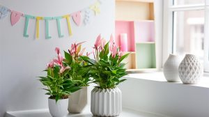 A healthy children's room with the help of plants