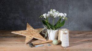 DIY: een Phalaenopsis Kerst arrangement