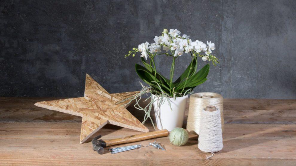 DIY: DIY: Phalaenopsis Christmas arrangement Christmas arrangement
