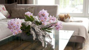 Zo word je de beste in het verzorgen van kamerplanten: 3 tips