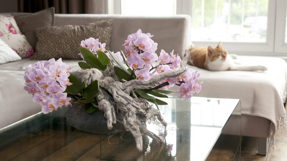 Become the best at taking care of houseplants: 3 tips
