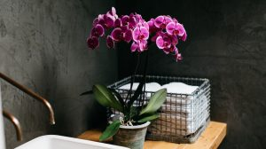 Inspiration: how to decorate your bathroom with orchids