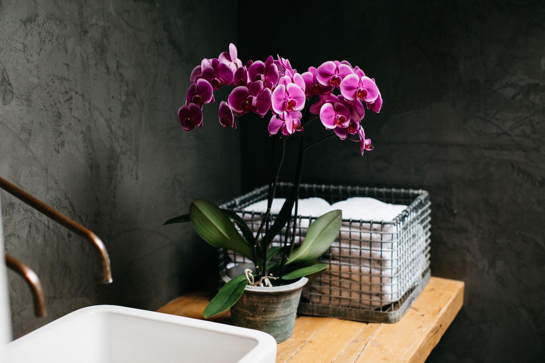 Inspiratie: decoreer je badkamer met orchidee planten