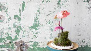 DIY: een kokedama met een anthurium maken