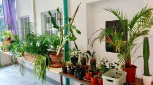 The nicest urban plant shops in Leiden