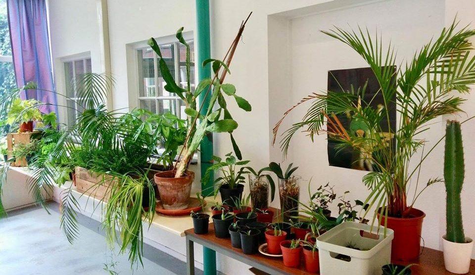 De leukste plantenwinkels in Leiden