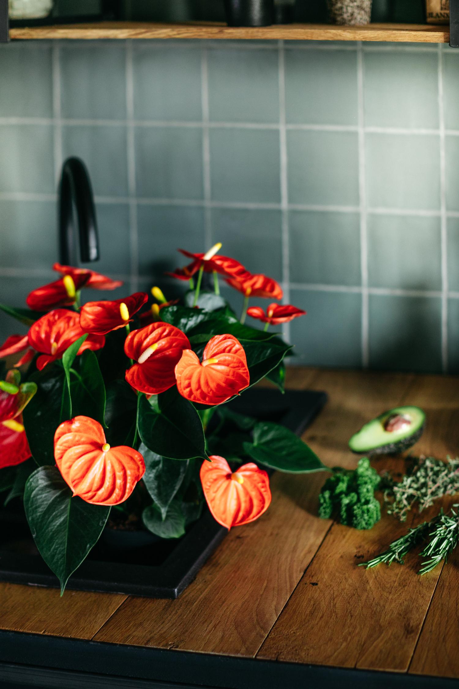 Inspiratie: zo style je de keuken met anthurium planten