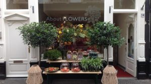 The nicest urban plant shops in The Hague: 5 tips